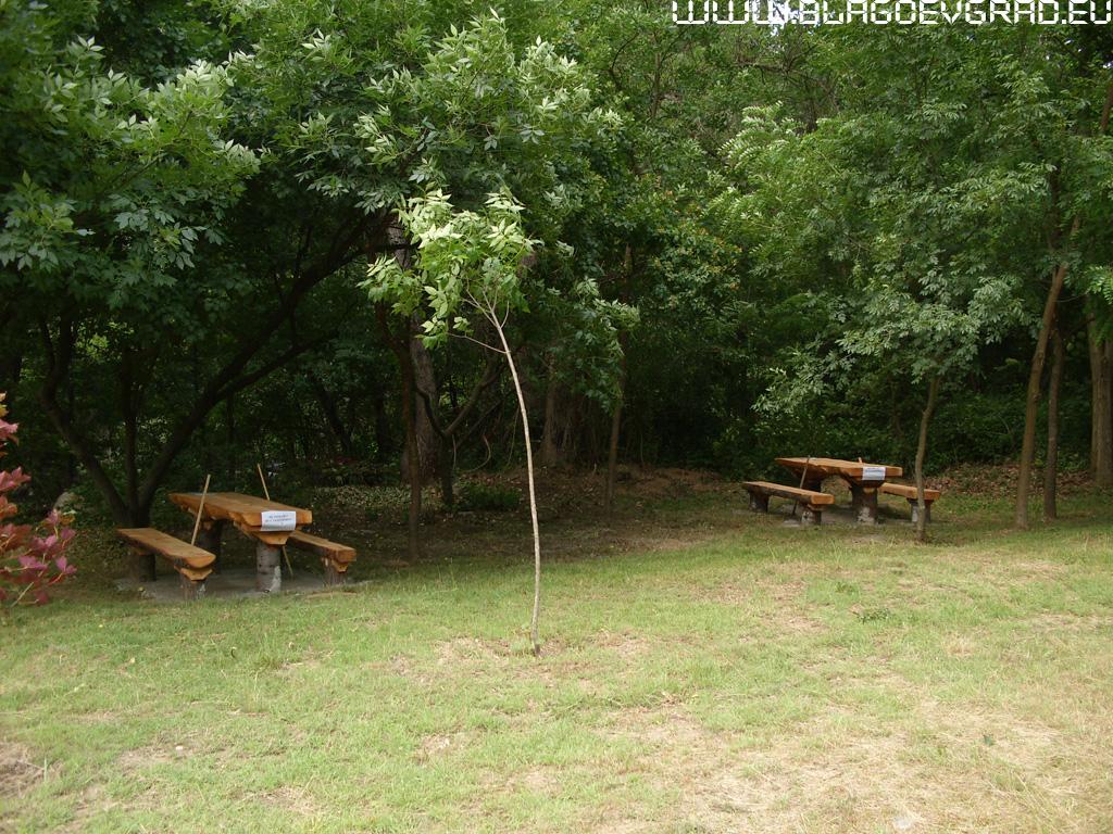 дървесина, вековна