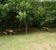 Община Сандански не е секла незаконно вековни дървета