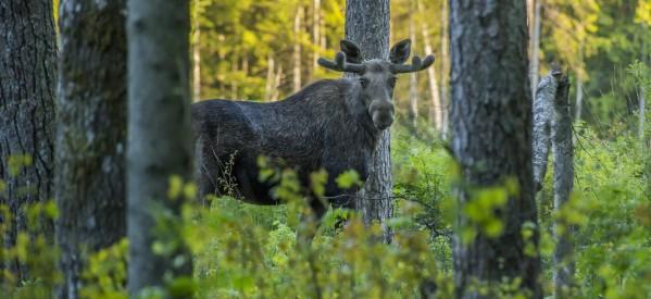 Преимуществото на ловни камери е безспорно – ето някои функционалности