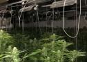 Две лица са задържани за отглеждане и държане на марихуана в община Сандански